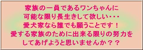 愛犬(キャッチコピー).jpg